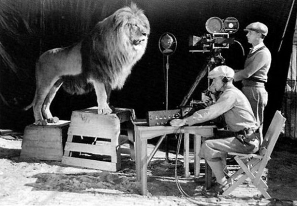 mgm, lion, photo, animal, wide