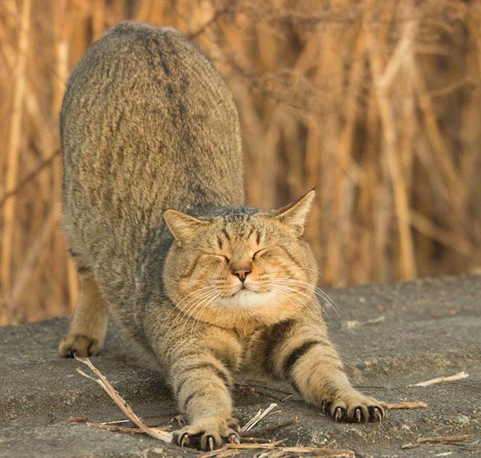 Картинки по запросу Жизнь уличных котов в смешных фотографиях